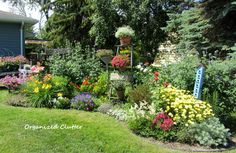 Love using ladders for height in this cottage garden; also love the blue birdcage