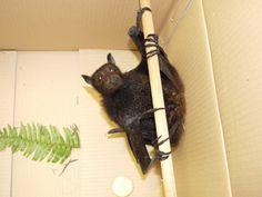 Bat pole dancer ;-)