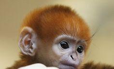 Cutest primate EVER!