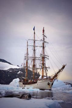 Bark Europa in Antarctica. Old Sailing Ships, Sailing Adventures, Wooden Ship, Yacht Boat, Set Sail, Wooden Boats, Tall Ships, Water Crafts, Yachts