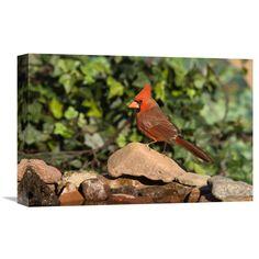 Global Gallery Northern Cardinal Male Santa Rita Mountains Arizona Wall Art - GCS-453350-1218-142