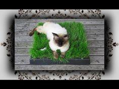 DIY  Chill Out Zone aus Katzengras - Einfach zum Kotzen! - YouTube