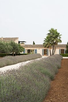 Palm Trees - A palm tree at the end of a lavender-lined pathway to a Majorca home from Lonny Magazine