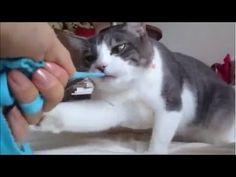 猫はとても賢い動物で、 狙った獲物を手中に収めるまで決して諦めないということがこの動画で明らかにヾ(*ΦωΦ)ノ