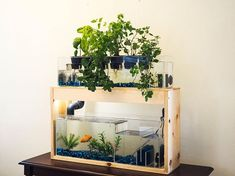 desktop aquaponics kit