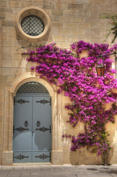Just walked past this prettiness today in Mdina, Malta! Bouganvillea looks its best in Malta