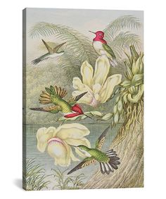 Loving this English School Hummingbirds Wrapped Canvas on #zulily! #zulilyfinds