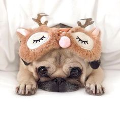 """Cute Pet Club — From """"Who is also excited for the. Super Cute Animals, Cute Baby Animals, Funny Animals, All Animals Pictures, Funny Dog Pictures, Pug Puppies, Cute Dogs And Puppies, Mop Dog, Best Friends Cartoon"""