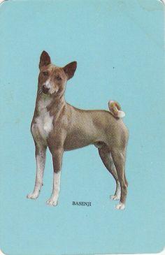 VINTAGE WOOLWORTHS (SWAP) CARDS - 1 SINGLE - BLUE 'BASENJI' DOG