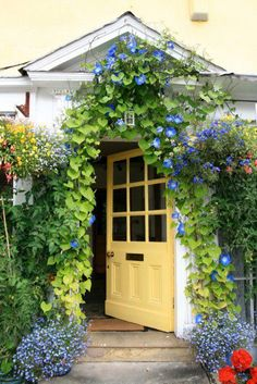 Morning Glories and vines. Love how lush this looks. It would be amazing with a pergola or an arbour.