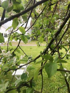 Kesän ihanimmat raparperiherkut – Onnea nikkaroimassa | Meillä kotona