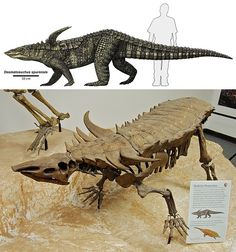 Desmatosuchus - Desmatosuchus is an extinct genus of archosaur belonging to the Order Aetosauria. It lived during the Late Triassic.
