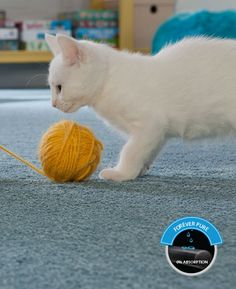 Mohawk creates the best carpet for pet owners by using the best carpet fiber for pets. Ultimate stain resistance & resilience highlight our pet-proof carpet. Mohawk Carpet, Mohawk Flooring, Flooring Sale, Kitchen Carpet, Best Carpet, Creative Home, Carpet Runner, Pets, Pet Lovers
