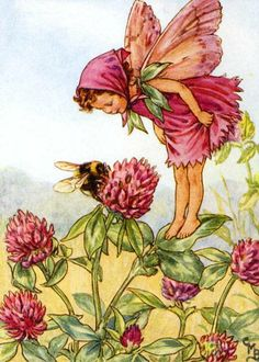 FLOWER FAIRIES/BOTANICALS: The Red Clover Fairy; This is an original vintage Cicely Mary Barker Flower fairies colour print. It is not a modern reproduction, approximate size x x 3 inches Cicely Mary Barker, Vintage Fairies, Vintage Art, Vintage Images, Vintage Prints, Vintage Sewing, Clover Flower, Bee Flower, Grass Flower