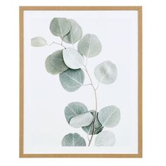 The EUCALYPTUS II Framed Print 64 X is part of freedom's range of contemporary furniture and homewares and is available to buy online or in stores across Australia. Office Storage Furniture, Curtain Accessories, Collage Frames, Oak Color, Kids Pillows, Rug Shapes, All Wall, Kids Decor, Botanical Prints