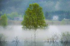 A rising flood of fog