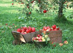 arvores de bons frutos - Recherche Google