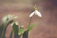 spring time by Zlatica Rybárová on 500px