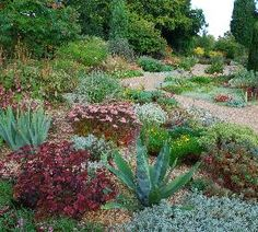 Beth Chatto Gardens are beautiful, and planted for dry conditions - perfect for saving water. Her plant lists are really handy.