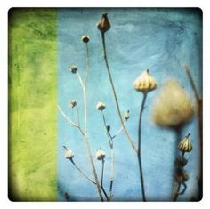fabiennerivory_labokoff_flora.jpg (263×262)