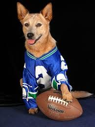 Image result for dog in football jersey