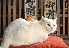 Twitter / nekozamuraiinfo: おはようございます!今日からお仕事の方も、とっくに始まっている方も、元気にがんばっていきましょう!少々遅くなりましたが鏡餅でございます。 #猫侍 #白猫