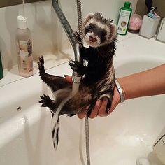 Bath time, Fuzz Butt!