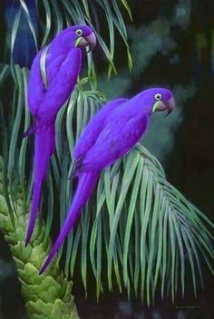 Purple birds !