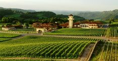 Located a short distance from Miolo Winery, our hotel near Caxias do Sul is located in the heart of Vale dos Vinhedos, one of Brazil's best wine regions. Rio Grande Do Sul, Luxury Spa Hotels, Home Styles Exterior, Real Nature, Marriott Hotels, Family Travel, Places To Travel, Countryside, Vineyard