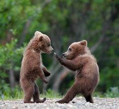 Very cute bear karate Karate, Baby Animals, Funny Animals, Cute Animals, Animal Memes, Animal Funnies, Animal Antics, Large Animals, Wild Animals