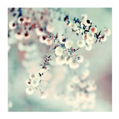 Ethereal Nature Photography, Midwinter Daydream, 5x5 Print,  Mint Green, Winter Photo, Color Photograph on Etsy, $15.00