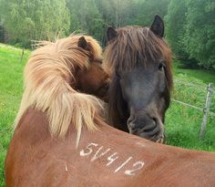 I suggest that you scratch my back and I scratch yours by Hilde Widerberg My Horse, Horses, Scratch My Back, She Left Me, Pictures, Animals, Photos, Animales, Animaux