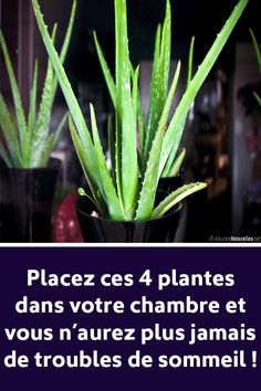 These 4 plants for your room will cure insomnia and sleep apnea – Health Nutrition Health And Nutrition, Health Fitness, Weght Loss, Ginger Wraps, Burn Out, How To Know, How To Make, Fitness Tattoos, Plantar