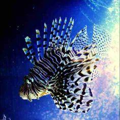 Florida fish :)
