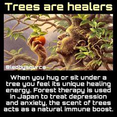 Spiritual Wisdom, Spiritual Awakening, Cultures Du Monde, A Course In Miracles, Spirit Science, Mind Body Soul, Natural Healing, Fun Facts, How Are You Feeling