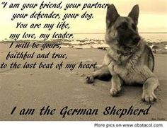 Image Search Results for funny german shepherd   ...........click here to find out more     http://googydog.com
