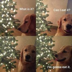 dog wants to eat it