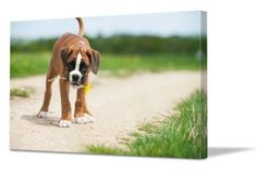 Take photos at your pet's height. Tips for photographing pets