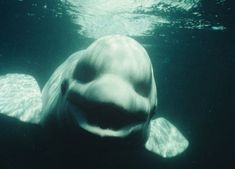 terrifying sea creatures monsters - Google Search