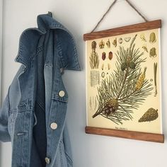 Pinetree, one of swedens most abundant trees. Awesome poster in A4! Next to a jean jacket, because it's summer now!