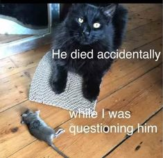 30 Of The Most Hilarious Animal Pictures That Will Make Your Day Funny pictures of the week. This is our collection of the top most hilarious animal pictures that will make your Funny Animal Jokes, Funny Cat Memes, Cute Funny Animals, Animal Memes, Cute Baby Animals, Funny Cute, Cute Cats, Hilarious, Animal Humor