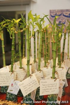 I don't think bamboo would fit my wedding theme, but favors like this would be so cute.