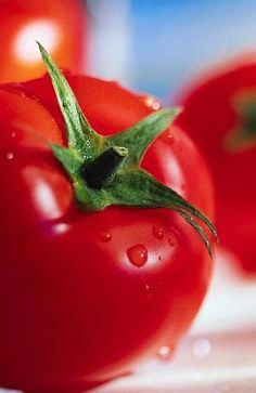 Did you know that you should always keep apples in the fridge but you should never keep tomatoes in the fridge? Read more tips here!