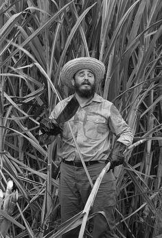 FIDEL CASTRO DANS UNE PLANTATION DE CANNE A SUCRE, 1969.