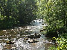 deep creek trail in the smokies   along Hazel Creek Trail FEB 2013 - Picture of Hazel Creek, Great Smoky ...