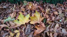 Natuurlijke structuur  Hoop met bladeren van een notenboom en van een plantaanboom