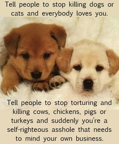 Tell people to stop killing dogs or cats and everybody loves you. Tell people to stop killing cows, chickens, pigs, or turkeys and suddenly you're a self-righteous asshole that needs to mind your own business. bacon / ham / pork / burger / roast / beef / steak / veal / lamb / chicken / turkey / duck / eggs / milk / cream / cheese