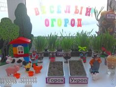 Картинки по запросу огород на подоконнике в детском саду своими руками