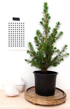 Via Beeldsteil   A Nordic Christmas