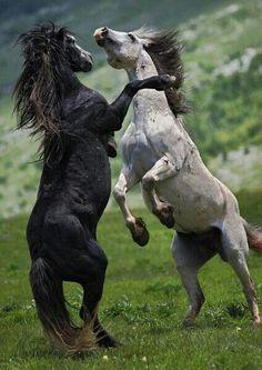 "chefepaulino: ""Fantástica natureza animal lindas imagens """